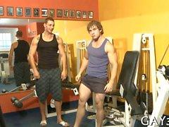 Dudes gay appena in ginnastica fottuta quella bei culi