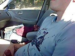 Junge Hengst kommt in der Auto