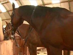 Att få naken med hästar
