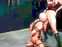 Harmony transando com ela de escravos antes de sufocar com o bichano