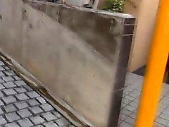 Osea asiatiche pisciano nella via