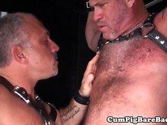 De rippade björnen barebacks suspenderade varg i hiss